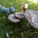 """Look, Nameless. Mushrooms! They almost look magical. And veggies make a very healthful snack."""
