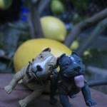 The police brought Nameless home, where Gray was waiting for him in his favorite spot: under the lemon tree. It was the happiest moment of their lives!