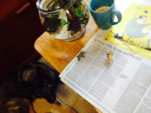 One of the things we love most about house sitting is it let's us try on other people's lives. This morning, we read the New York Times to Mr. Fish & the lovely (and very large) Miss Vesper over a delicious homemade cappuccino!
