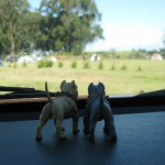 After a long relaxing drive, Gray & Nameless arrived at the campground. Judging by the number of tents, they weren't the only ones who enjoyed camping!